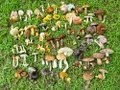 How We Identify Mushrooms 2 Hd