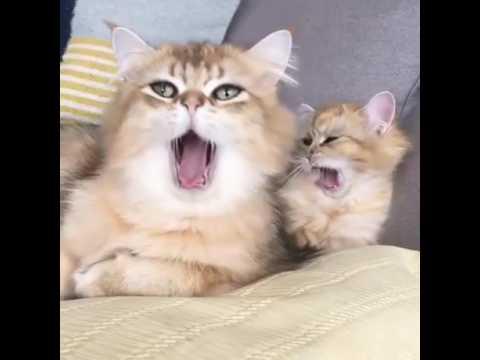 Imagens de feliz páscoa - Gif de gatinho
