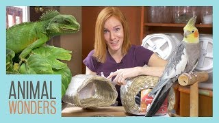Unboxing New Animal Toys! by Animal Wonders