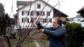 #320 Schneiden im Garten 2011 Familie Boeni 5v5 - Hohlkronenschnitt beim Apfel
