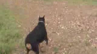 Ceasar At Dog Park (trails)