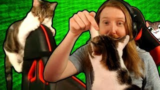 Video Terra Takeover ~ My kitty has been SLIGHTLY spoiled [CAT HIGHLIGHTS] MP3, 3GP, MP4, WEBM, AVI, FLV Oktober 2018