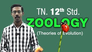 12th Zoology Tamil Nadu Samacheer  Theories of Evolution To watch the rest of the videos buy this DVD at http://www.pebbles.inhttp://pebblestv.comPebbles Live YouTube Channel: https://www.youtube.com/user/PebbleschennaiEngage with us on Facebook at https://www.facebook.com/PebblesChennaiTwitter: https://twitter.com/PebblesChennaiGoogle+: https://plus.google.com/+Pebbleslive/postsShare & Comment If you like
