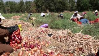 الزراعة الأسرية في الأردن