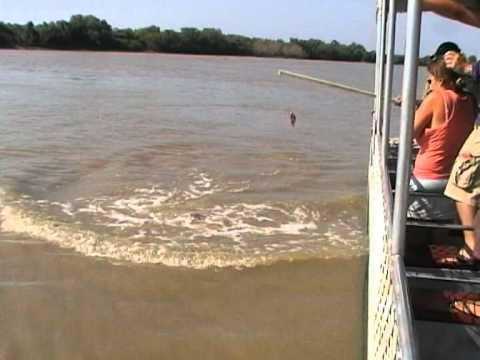 遊客準備肉塊釣魚 卻被突然湧出的龐然大物嚇壞!