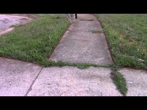 edging and cutting a new yard...... (видео)