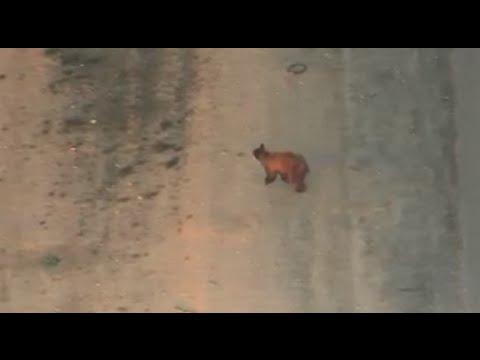 Bear sighting in Queen Creek