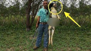 Video Pria tak sengaja tangkap Makhluk Aneh di hutan, Saat diperiksa dia Terkejut!! Ternyata ini.. MP3, 3GP, MP4, WEBM, AVI, FLV Februari 2019