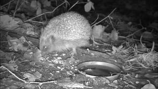 Wildlife Trail Camera - 22.11.2016