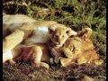 Shari-ng with Shari: Awesome Animal Moms