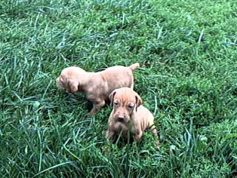 puppies playing in the grass