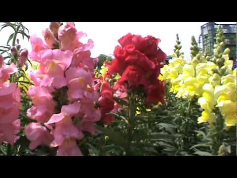 flores de estacion