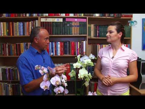 Ne Shtepine Tone, Pjesa 4 - 10/10/2017 - Orkidea
