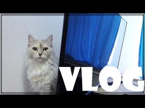 Katzen rasieren 😱| Balui VLog (07/09/18)