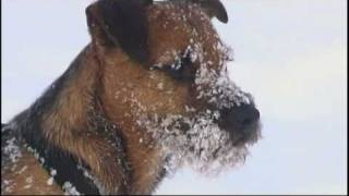 David Vs. Goliath : Total Lustig; Totally Funny ! Hunde Toben Im Schnee ; Dogs Rage Around In Snow !