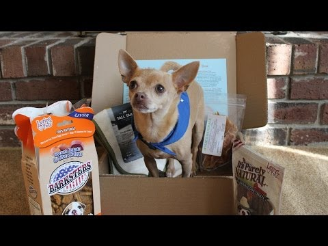 Bugsy's Box Unboxing with Tommy Chihuahua