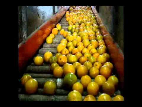 Encerado de naranjas, Central Naranjera, Morelia