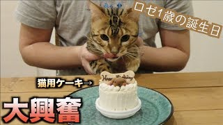 Video ロゼの誕生日なので猫用ケーキあげたら過去最高の野生化したwww MP3, 3GP, MP4, WEBM, AVI, FLV Juli 2018