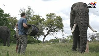 Elephant Who Hurt His Leg Gets Help From A Hero | Dodo Heroes Season 1 by The Dodo