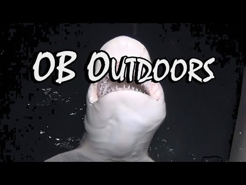 Shark Fishing – Atlantic Ocean (Florida): OB Outdoors – Episode 9