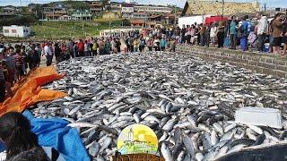 Khmer Culture - Fishing Trap & Crab Trap in Cambodia