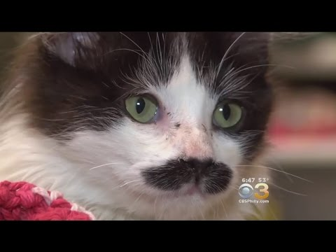 THE KITTEN WITH THE MOVIE STAR MOUSTACHE