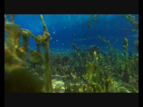 Job:38:4 Jehová le puso barricadas al  océano