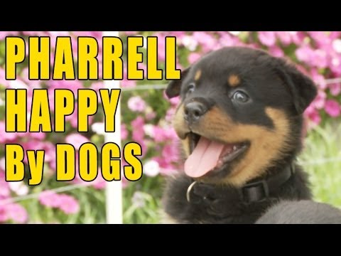 Pharrell HAPPY - The PUPPY version!