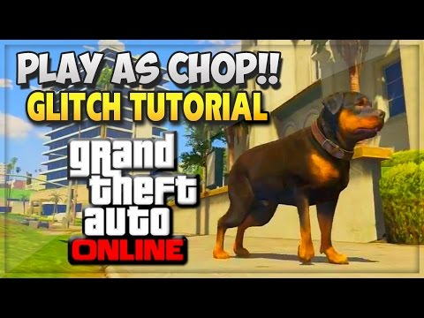 Gta - GTA 5 Glitches Online - GTA V How To Play As Chop Online (GTA 5 Online Glitches Gameplay & Mods) GTA 5 & GTA 5 Online http://bit.ly/1hfHVIA Subscribe! ▻ Follow Me On Twitter: https://twitter.com/...