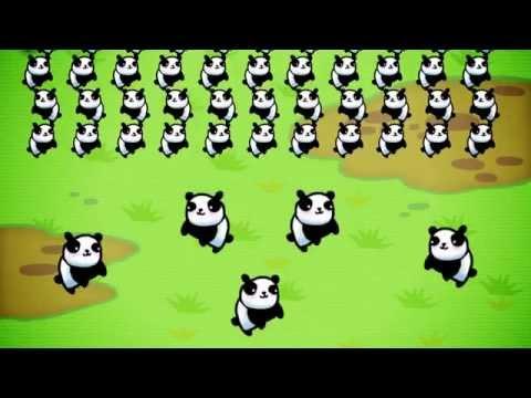 Video of The Last Panda