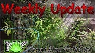 Weekly Update 4/19/2017 by  NVClosetMedGrower