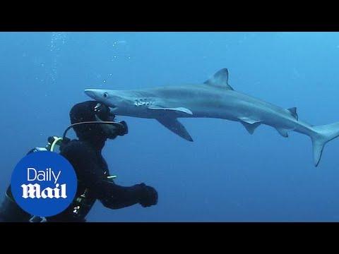 Δύτης έρχεται πρόσωπο με πρόσωπο με καρχαρία