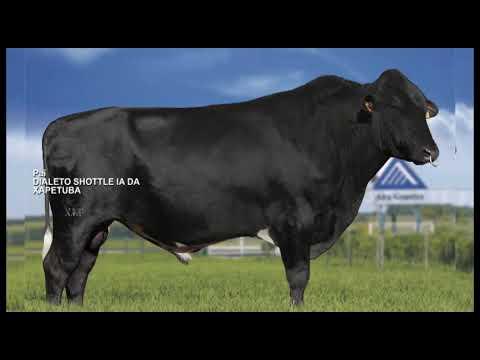LOTE 08 - JIBRAN DIALETO XAPETUBA