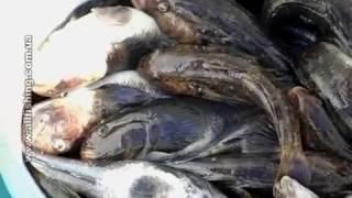 Морская рыбалка в Одессе - Днестровская банка.