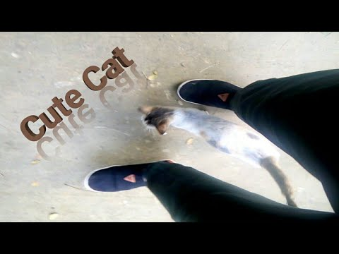 cute and funny cat videos 2019