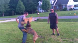 Juke K9 Home Defense Dogs