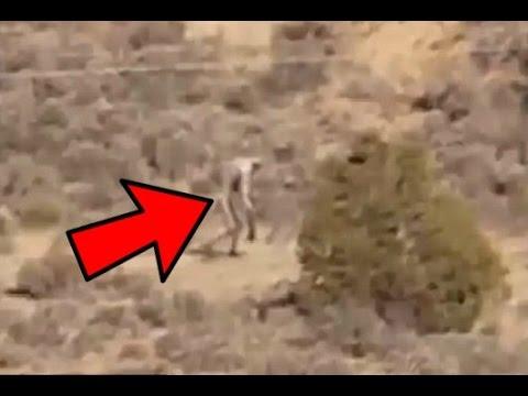 12 misteriose creature riprese da videocamere!