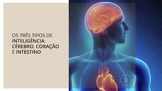 Os três tipos de inteligência: cérebro, coração e intestino