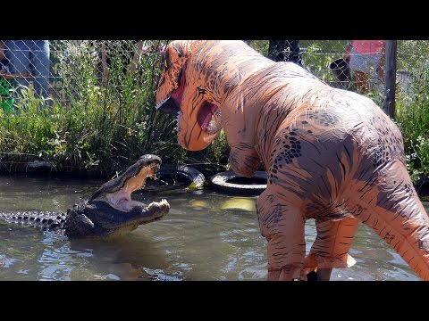 Man Dressed As T-Rex Plays With 500LB Alligator