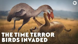 Video The Time Terror Birds Invaded MP3, 3GP, MP4, WEBM, AVI, FLV Maret 2019