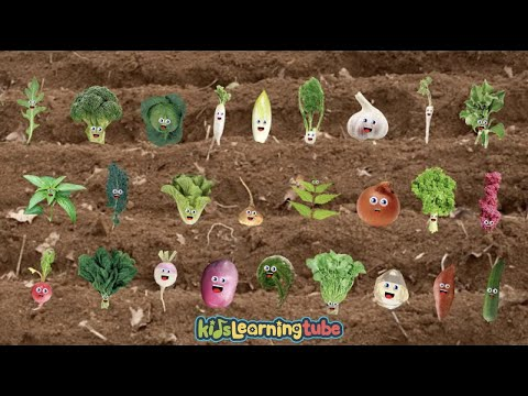 The Vegetable Song for Kids