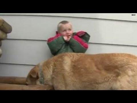 這位3歲小男孩從後院消失後大家都立馬搜尋,結果最後竟在草原上發現有一隻狗狗壓著他…