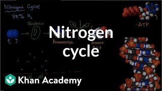Nitrogen cycle  | Ecology | Khan Academy