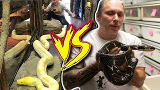 REPTILE ZOO vs BHB Reptiles!! Pros and Cons!!! | BRIAN BARCZYK by Brian Barczyk