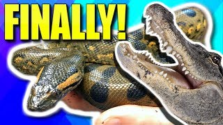 LETS TALK ABOUT MY PET ANACONDA AND PET ALLIGATOR!! | BRIAN BARCZYK by Brian Barczyk