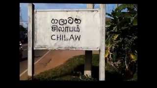 Chilaw Sri Lanka  City new picture : Racing homer pigeon in Sri Lanka release from Chilaw