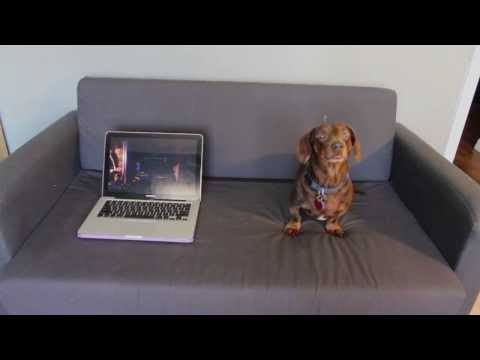 dachshund: magic tricks!