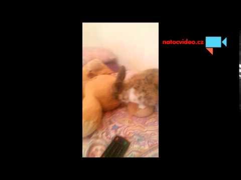 Kdo si hraje nezlobí aneb Králík a medvěd