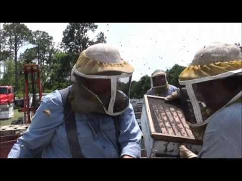 Beekeeping: Making Up 3 Lb Packages For 2010