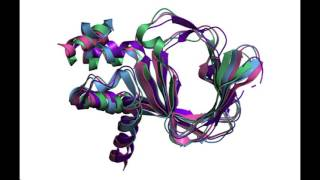 Structural Comparison of Protein Kinase A (PKA) with Protein Kinase G (PKG) Video Thumbnail